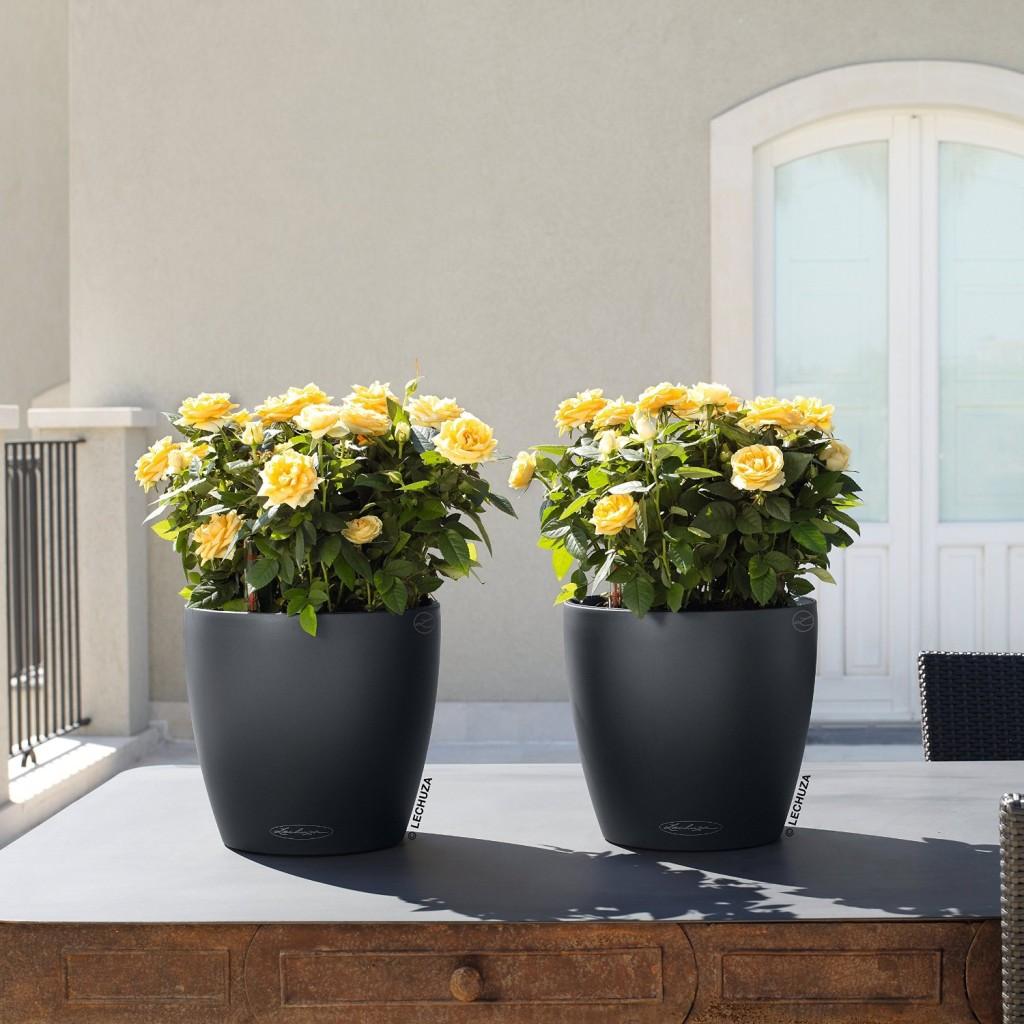 Minimalist Self Watering Planters in Dark Grey